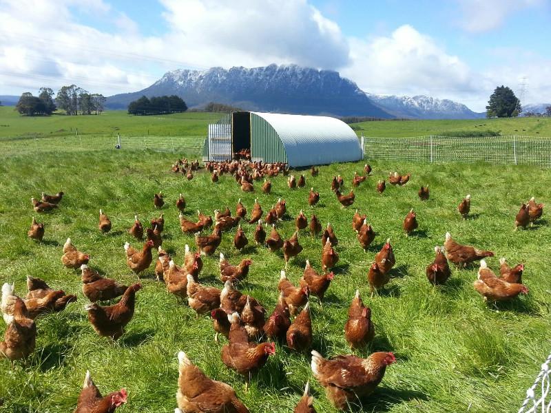 Mt Roland Free Range Eggs