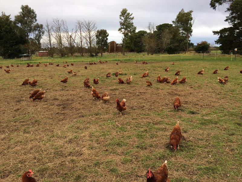 Yannathan  Dheavii Farms