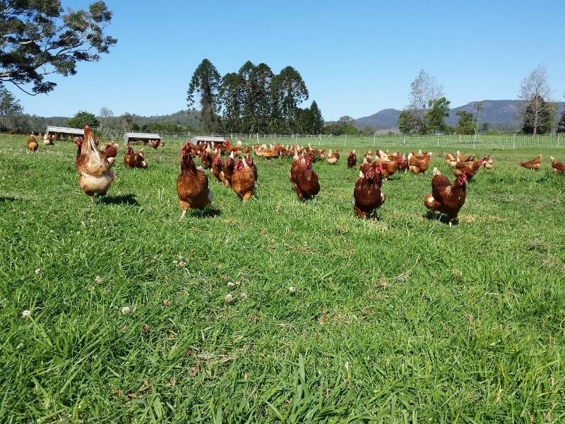 Kenilworth Free Range Farm
