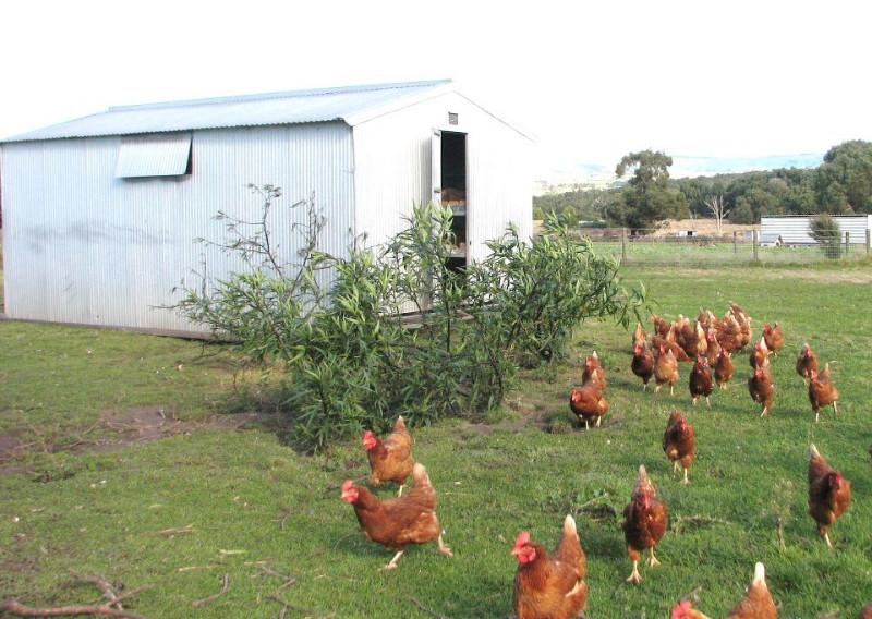 Freeranger Egg Farm